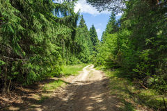 Country road through pine forest Stock Photos