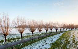 Country road with pollard willow trees in a row. Country road with pollard willow trees in a curved row. It is winter and some snow is fallen on the embankment royalty free stock photos