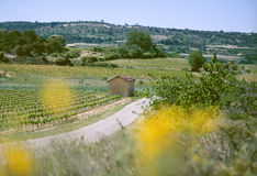 Country road in the Provence. Near Bedoin, Vaucluse Royalty Free Stock Photos