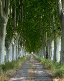 Country road in Provence Stock Photography