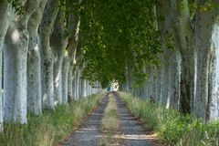 Country road in Provence Royalty Free Stock Images