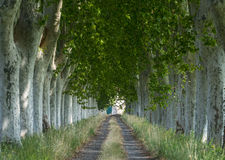 Country road in Provence Stock Photos