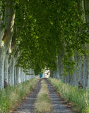 Country road in Provence Royalty Free Stock Image