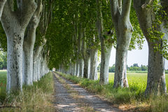 Country road in Provence Royalty Free Stock Photo