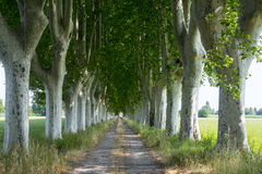 Country road in Provence Royalty Free Stock Photos