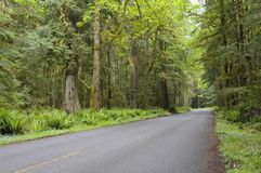 Country road in rain forest Stock Image