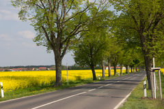 Country road and rape field. A country road in Germany is framed by yellow blooming rape fields Royalty Free Stock Photography