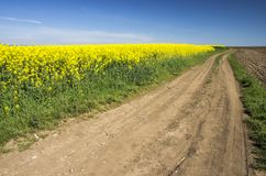 Country road and rape field Stock Images
