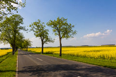 Country road and rape fields. A country road in Germany is framed by yellow blooming rape fields Stock Photo