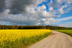 Country road and rapeseed field Stock Images
