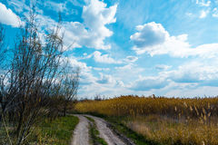 Country road in the reeds Royalty Free Stock Photos