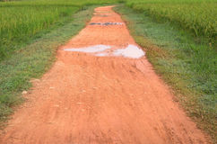 Country road in rice field Royalty Free Stock Images