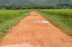 Country road in rice field Stock Photography