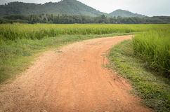 Country road in rice field Royalty Free Stock Photography