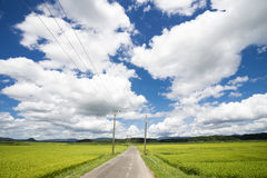 Country road. Between rice fields under sky with clouds in Kagoshima Royalty Free Stock Photography