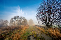 Country road through rich deciduous forest Stock Image