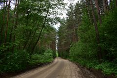 A country road on the roadside begins coniferous and very very dense forest. In the far end passes through the forest road stock images