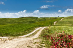 A country road on rolling hill in a rural landscape, Tuscany Royalty Free Stock Photography