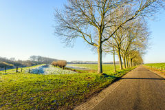 Country road with a row of trees after the frost. Dutch landscape with a row of leafless trees at the end of the fall season. After the first frost some white Royalty Free Stock Photo