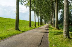 Country road between rows of tall trees Stock Images
