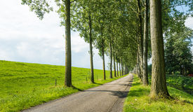 Country road between rows of tall trees Royalty Free Stock Image