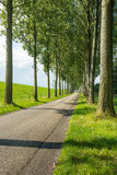 Country road between rows of tall trees Royalty Free Stock Photos