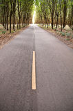 Country road in rubber tree garden Stock Photography