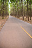 Country road in rubber tree garden Royalty Free Stock Photography
