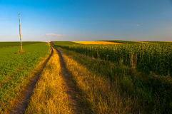 Country road and cultivated land Stock Photography