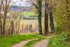 Country road running through green fields. Dirt country road running through green fields of the Po Valley in Romagna, Italy Royalty Free Stock Image