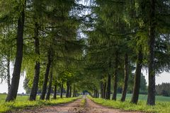 Country road running through tree alley. In Poland during sunset Royalty Free Stock Image