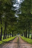 Country road running through tree alley. In Poland during sunset Royalty Free Stock Photo