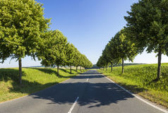 Country road running through a tree alley Royalty Free Stock Photo