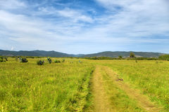 Country road in rural area. Through the sacred Buddhist field wit Royalty Free Stock Images