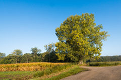 Country road in a rural area on a sunny autumn day. Royalty Free Stock Photo
