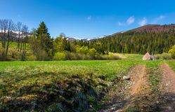 Country road through rural fields in springtime. Lovely nature scenery at the foot of the mountain with spruce forest and snowy tops royalty free stock image