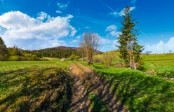 Country road through rural fields in springtime. Lovely nature scenery at the foot of the mountain with spruce forest and snowy tops Stock Photography