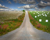Country road in rural landscape Royalty Free Stock Photos