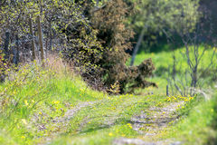 Country road in a rural landscape Stock Image