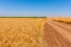 Country road and rural wheat fields. Stock Photo