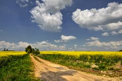 Country Road. Rural road with yellow flowering rapeseed field Royalty Free Stock Image