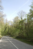 Country road in scenic deciduous forest Stock Photo