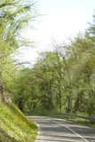 Country road in scenic deciduous forest Stock Image