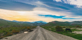 Country road. Scenic view of mountain road, Nature landscape, Sunrise in mountains Royalty Free Stock Images