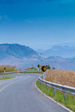 Country road side Royalty Free Stock Images