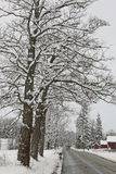 Country road with snow. Y trees on cloudy day Stock Photography