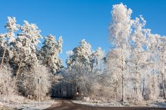 Country road through snowy wood Royalty Free Stock Images