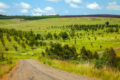 Country road  in South Africa. Country road through the forest somewhere in South Africa Stock Images