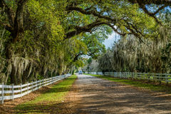 Country road, spanish moss, louisiana Royalty Free Stock Images