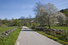 Country road at spring Stock Photo